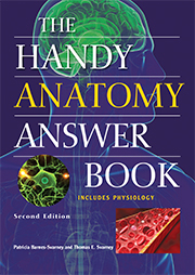 Handy Anatomy 2e